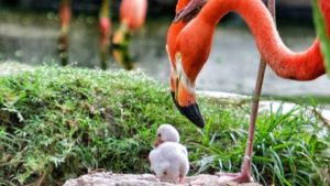 ht_baby_flamingo_kb_130530_wblog